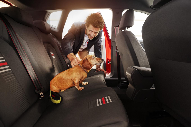 Pes v aute z nás robí opatrnejších šoférov