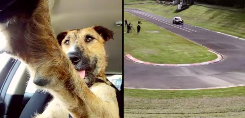 Psy za volantom: Pamätáte si túto milú iniciatívu?