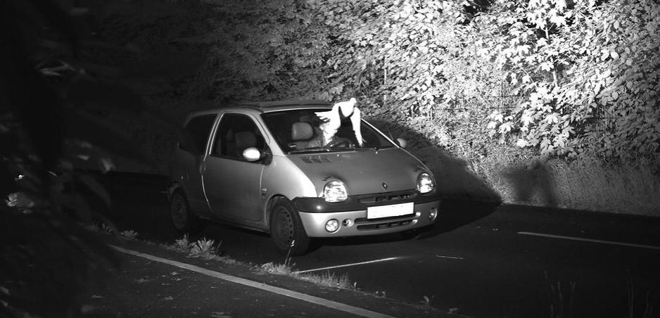 Tak toto ste ešte nevideli: Holub zachráni vodiča pred pokutou